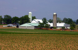 Photo: Farm and Raw Land Example